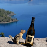 Crater Lake Squirrel - Cherie Anderson